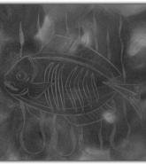 047-der-froehliche-fisch
