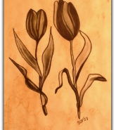 053-tulpen-in-schwarz-1