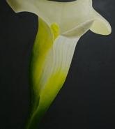 122-fossil-flower